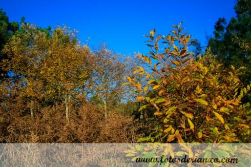 Outono Rianxo 002
