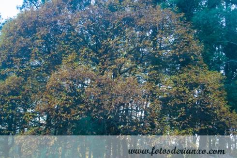 Outono Rianxo 010