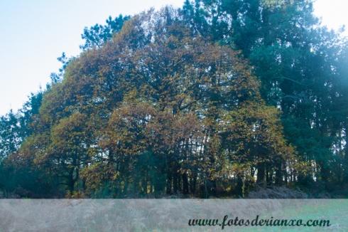 Outono Rianxo 011