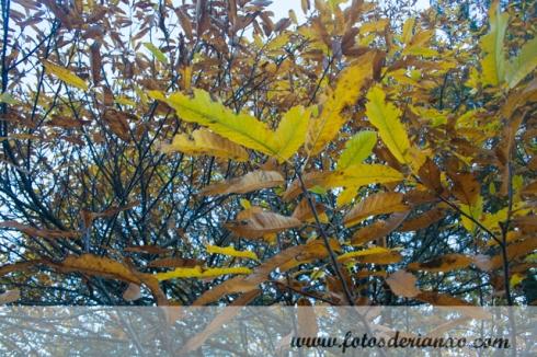 Outono Rianxo 014