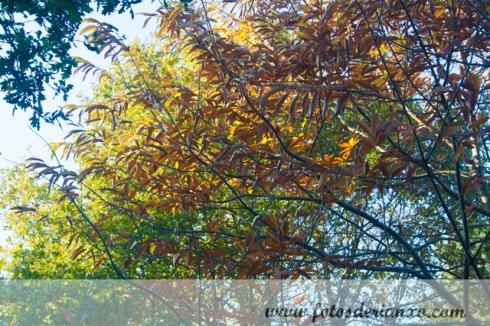Outono Rianxo 016