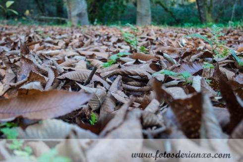 Outono Rianxo 027