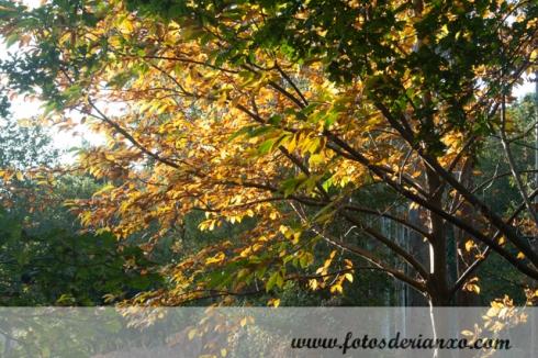 Outono Rianxo 030