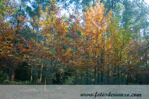 Outono Rianxo 038