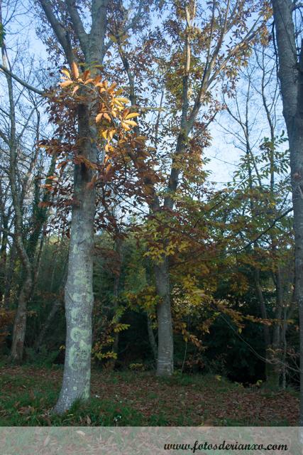 Outono Rianxo 066