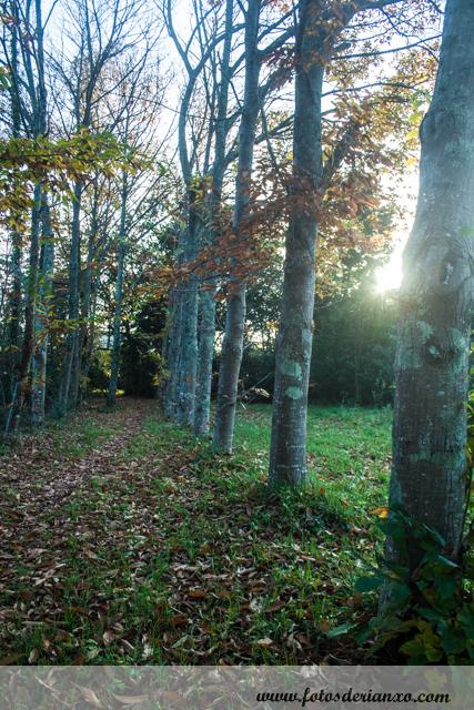 Outono Rianxo 067