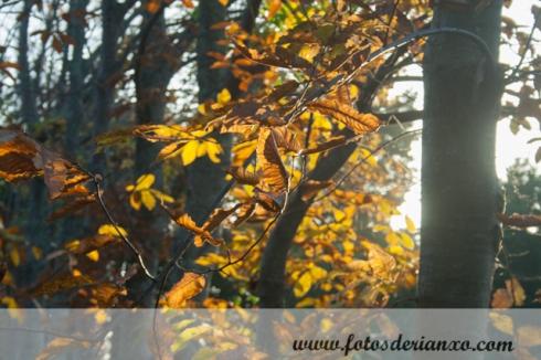Outono Rianxo 073