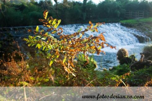 Outono Rianxo 085