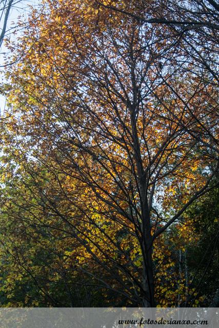 Outono Rianxo 101