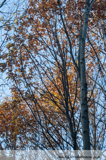 Outono Rianxo 102