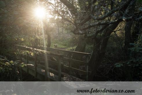 Outono Rianxo 129