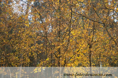 Outono Rianxo 144