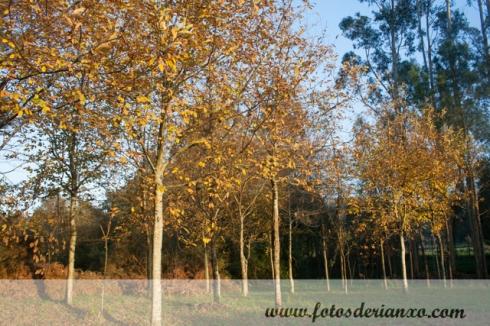 Outono Rianxo 145